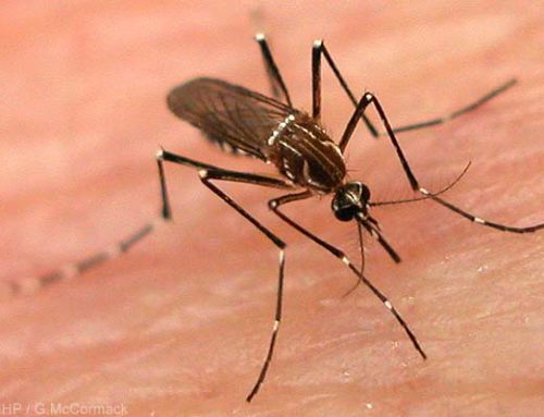 La malaria in Madagascar