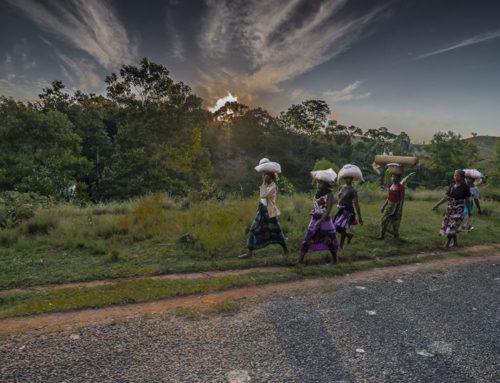 Foto d'autore del Madagascar